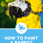 How To Draw A Parrot In Under 45 Minutes